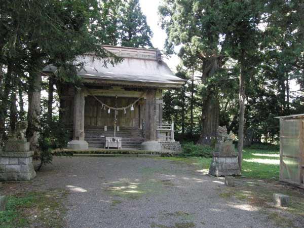 雫石神社の杉